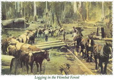 Logging in the Wombat Forest jpeg
